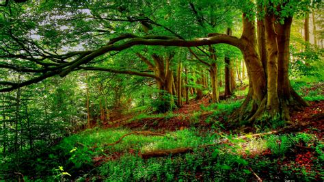 Landscape Trees New Forest Background Trees Tree Hd Nature